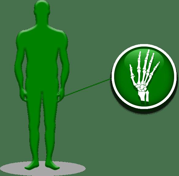 Wrist / Hand