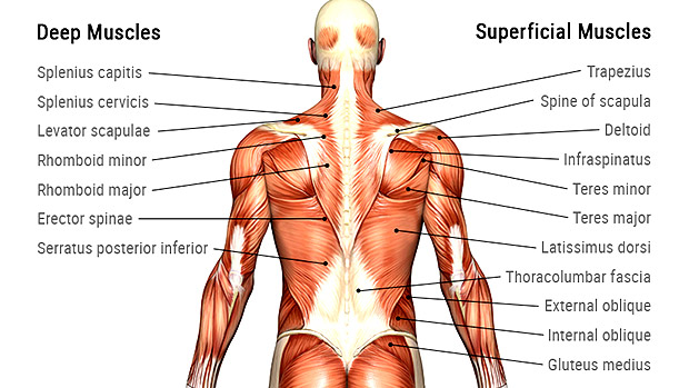 Pulled Back Muscles And Joint Irritation - Orchard Health Clinic